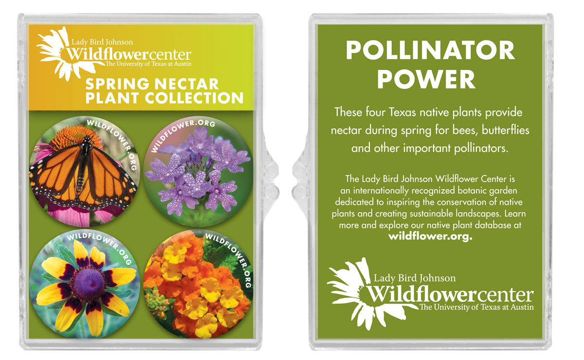 PROOFwildflower-Magnet-Set.jpg