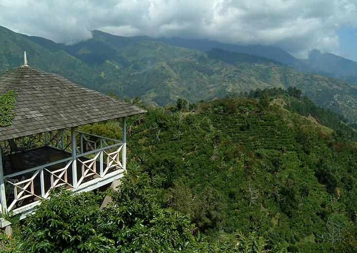 Cafe de Jamaica, el famoso Blue Mountain