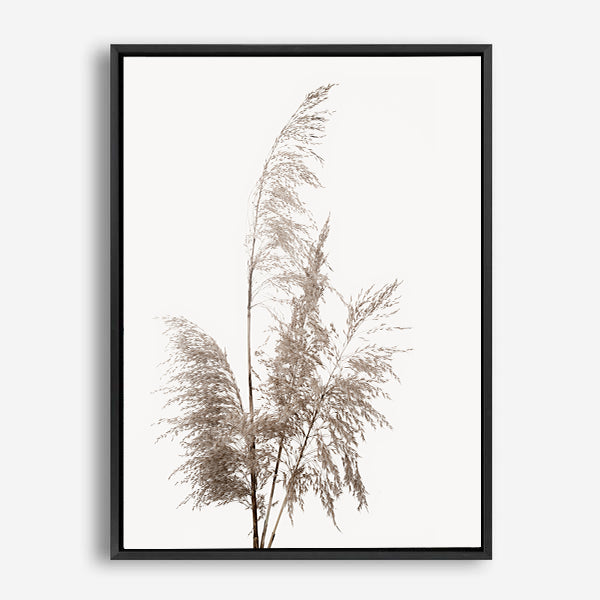 PAMPAS GRASS CANVAS