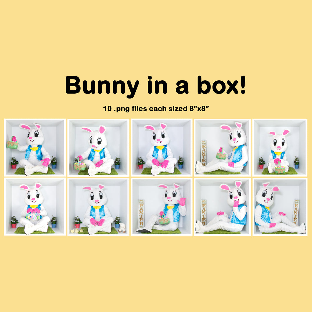 Easter Bunny In The Box