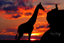 Load image into Gallery viewer, Giraffe & Rock Silhouette