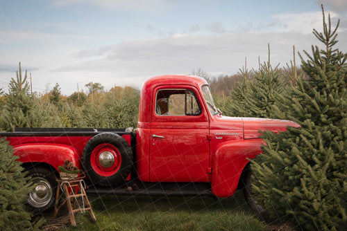 Vintage Red Truck in Christmas Trees - 2 scenes included - Digital backdrop