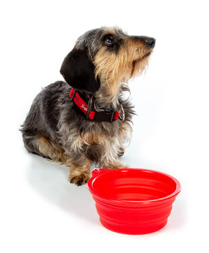 RED COLLAPSIBLE PET BOWL