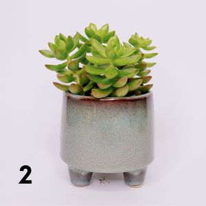 Succulent mix (in a pot on three legs)
