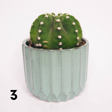 Load image into Gallery viewer, Cactus Avignon