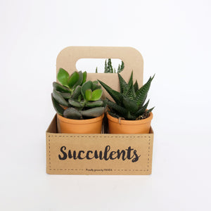 Succulents The Box