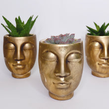 Load image into Gallery viewer, Succulents mix (plants in gold face pots)