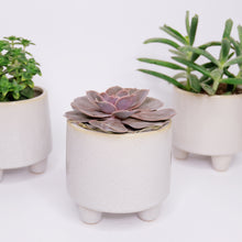 Load image into Gallery viewer, Succulent mix (in a pot on three legs)