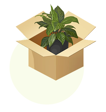 We pack your plants with care using recyclable packaging