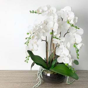 Phalaenopsis Orchid in Glass Pot - Large