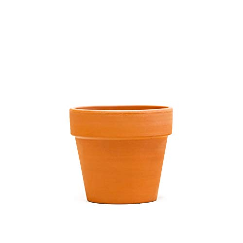 LIVETRENDS Urban Jungle Ivy Variegated in 4-inch Premium Terra Cotta Pot, (Live Plant)