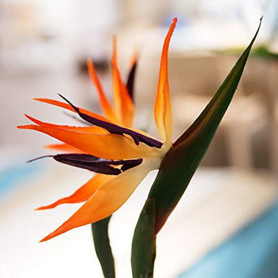 Warmter 32.5 Inch Large Elegant Bird of Paradise Artificial Flower for Home Office 3 Pcs (Yellow)