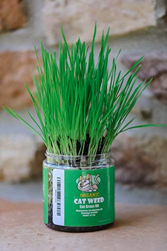 Cat Weed Cat Grass Kit, Organic Indoor Growing Plant with All Natural Soil & Wheatgrass Seeds, Packed with Folic Acid & Fiber Mix for Your Kitty Digestive, Hairball and Breath! (1 Cup)