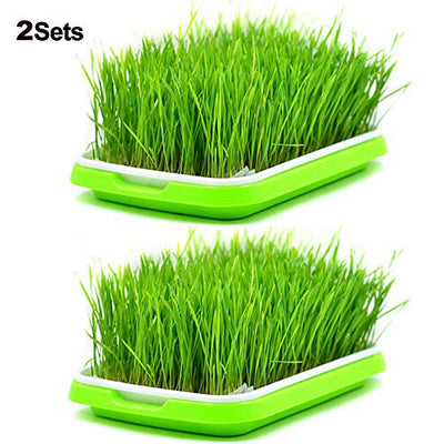 LeJoy Garden 2 Sets Sprouter Tray BPA Free PP Soil-Free Densely Small Hole Healthy Wheatgrass Grower 13.4x9.84x1.77inch