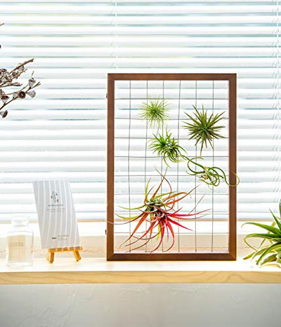Mkono Air Plant Frame Hanging Airplant Holder Tillandsia Display Hanger Wooden Shelf Wall Decor for House Plants, Succulent, 16""