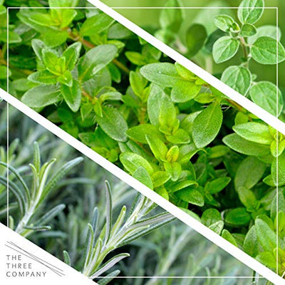 "The Three Company 4"" Assorted Herbs (6 Per Pack) (Rosemary, Oregano, Lavender, Thyme, Chamomile, Lemon Balm), Aromatic and Edible"