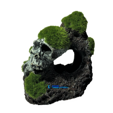 Skull With Moss - RBM Aquatics