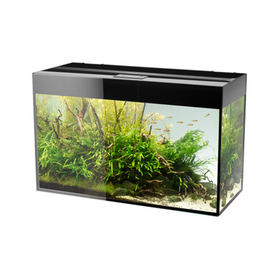 Aquael Glossy 100 Black Aquarium - RBM Aquatics