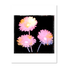 Load image into Gallery viewer, Gerber Daisy No.1