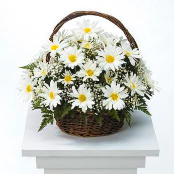 Flower Delivery Florist Funeral Sympathy Naples Humble Daisy Basket