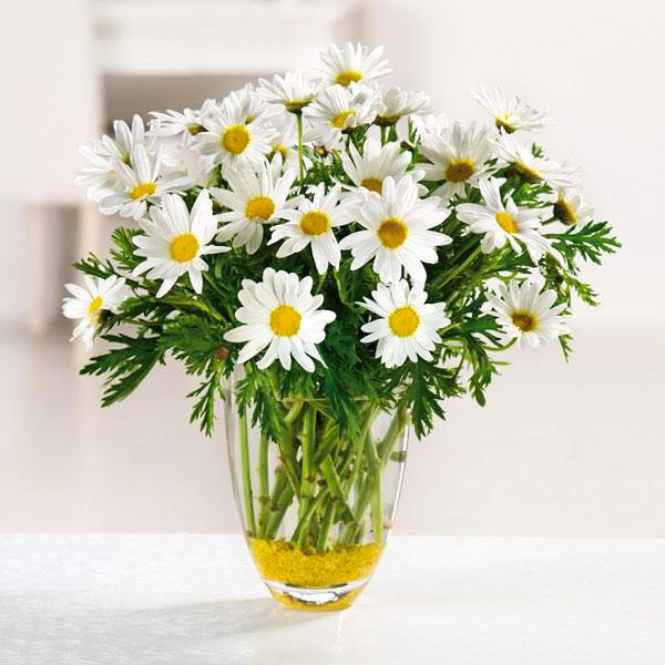 Flower Delivery Florist Funeral Sympathy Naples Humble Daisy Vase