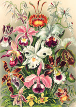 Load image into Gallery viewer, Orchid Opulence - 1000 Piece Puzzle