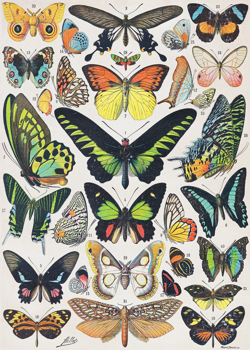Papillons Exotiques (Tropical Butterflies) - 1000 Piece Puzzle