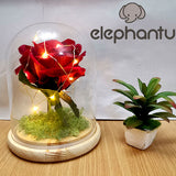 DIY Glass Dome Lamp -  Red Rose With String Light