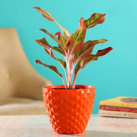 Big Kohinoor 6 (inches) Flower Pots  Available in Set of (4, 5, 8, 10, 12)