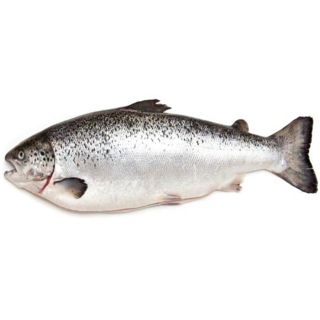 Atlantic Salmon Whole