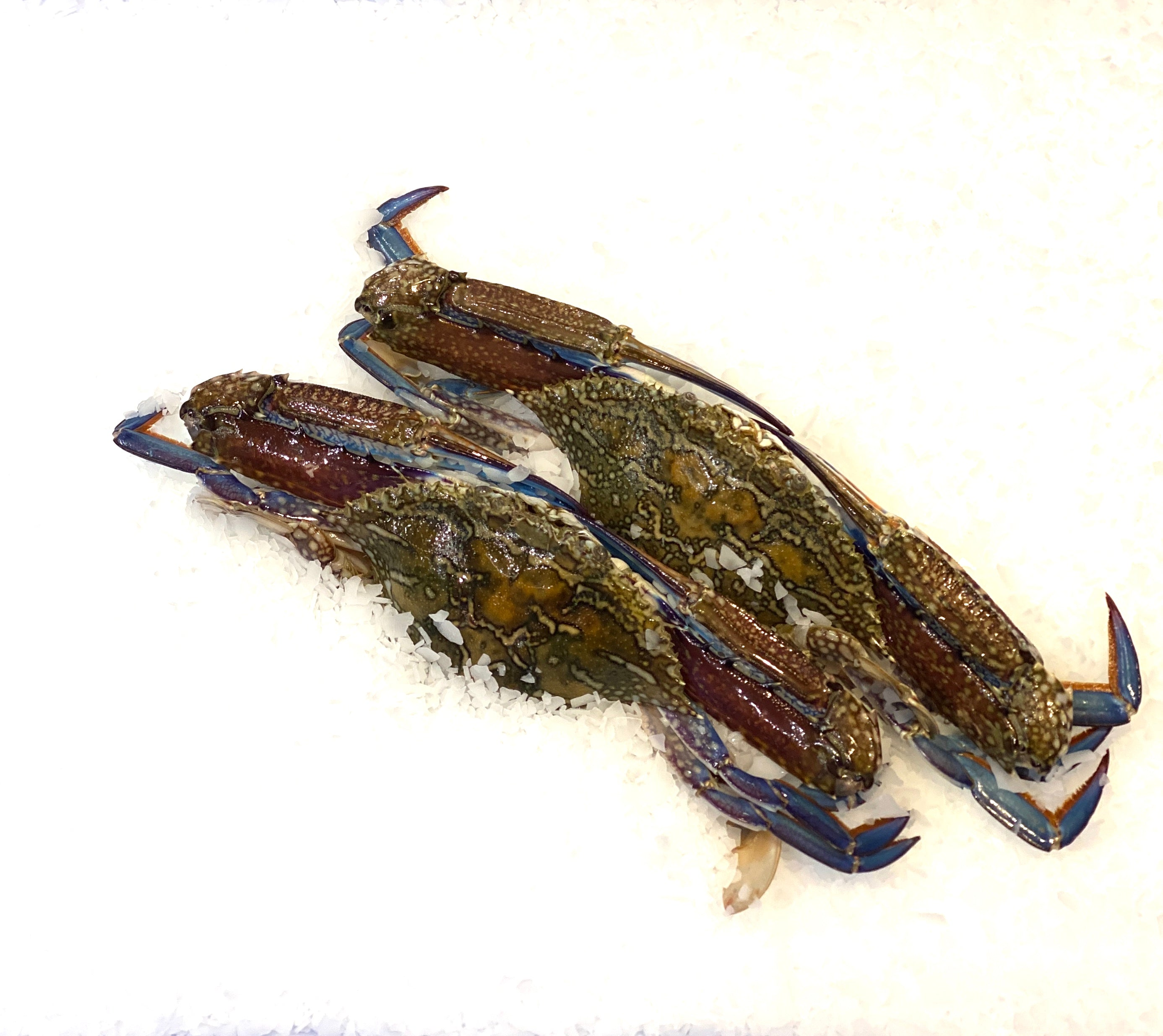 Green Blue Swimmer Crabs