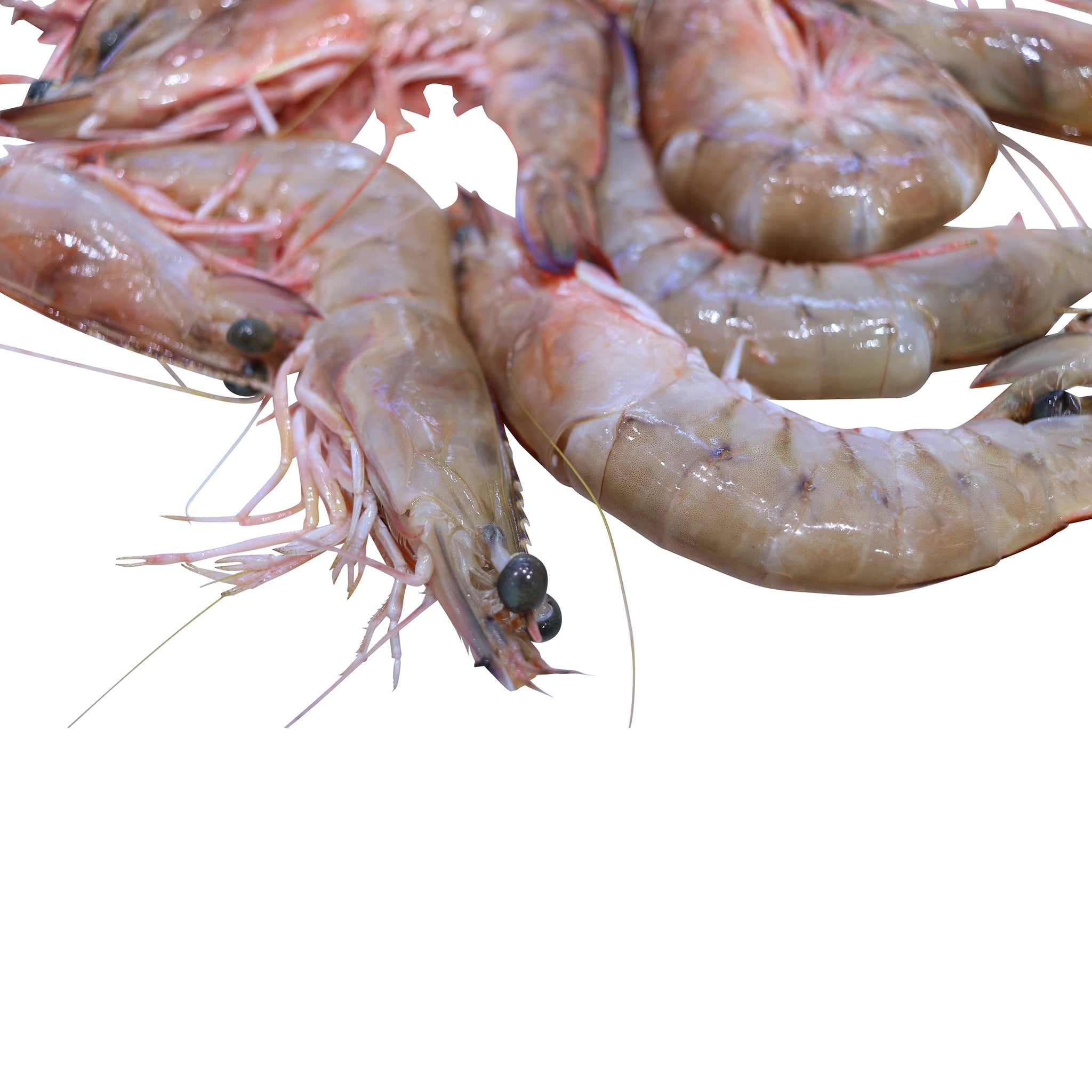 U8 (Large) Wild Green King Prawns