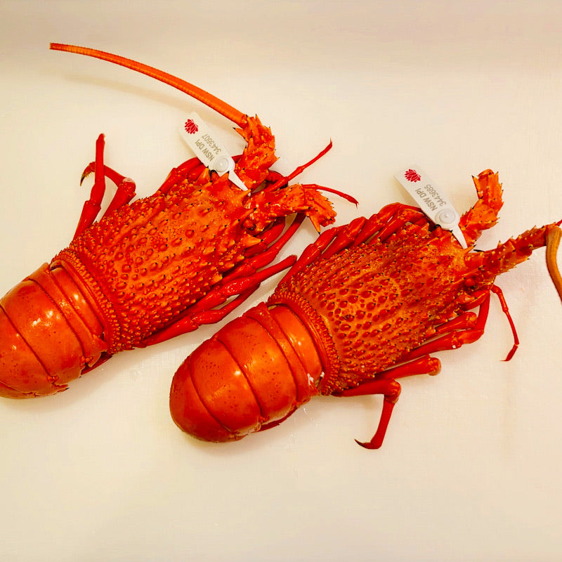 Cooked Eastern Rock Lobster