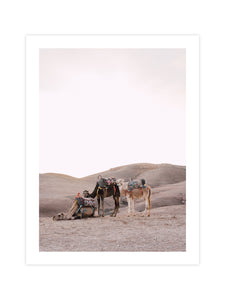 Print 'Golden Hour Camels'