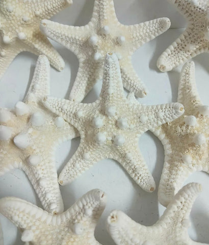 Star fish pack's