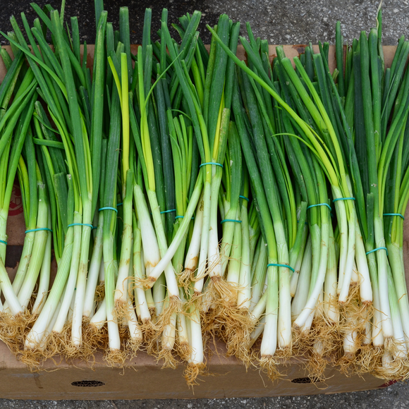 Spring Onion/bunch