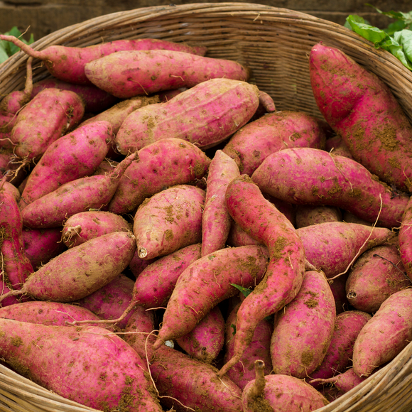 Sweet Potato/kg