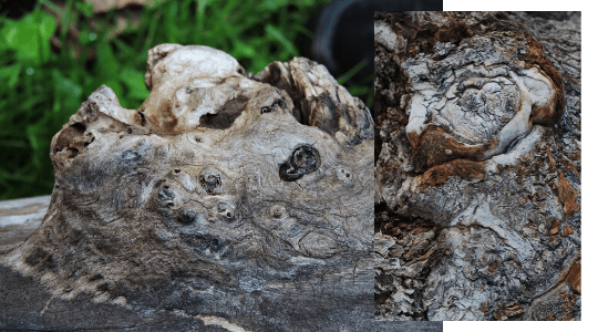 What Is Burl Wood? Check Out The Popular Burls Varieties And Its Features!