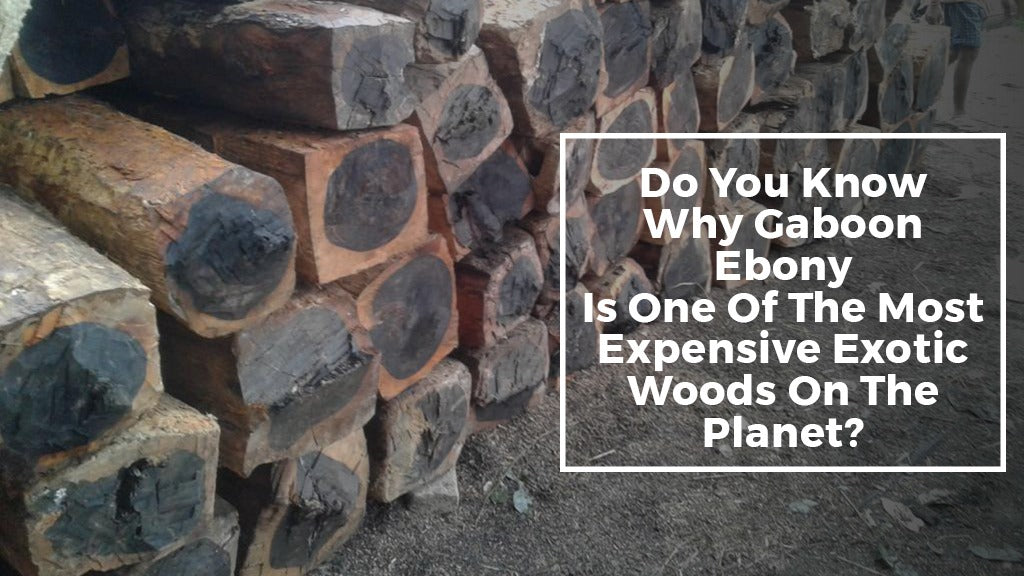 Do you know why Gaboon Ebony is one of the most expensive exotic woods on the planet?