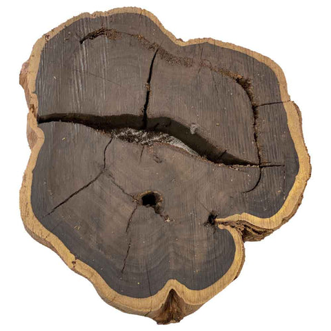 Beautiful & Rare African Blackwood Live Edge Slab/Cookies #119 - Exotic Wood Zone - Buy online Across USA