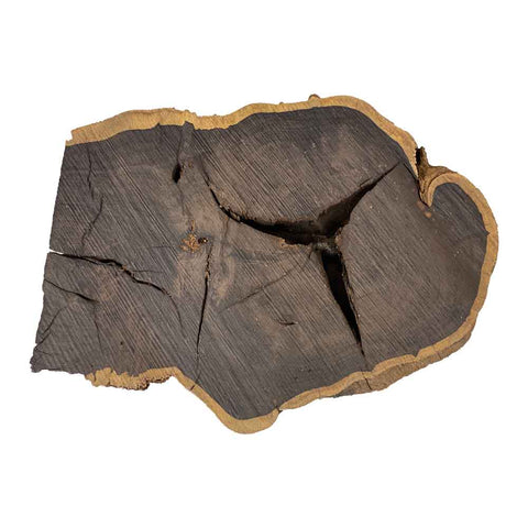 Beautiful & Rare African Blackwood Live Edge Slab/Cookies #120 - Exotic Wood Zone - Buy online Across USA