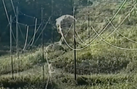 a vhs screenpature of an image of seven exposed over a green field of grass