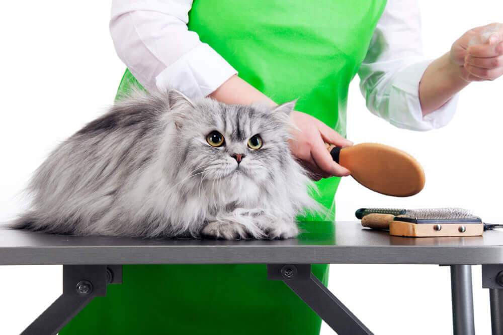 Cat Grooming Tools to Make Feline Ownership a Breeze