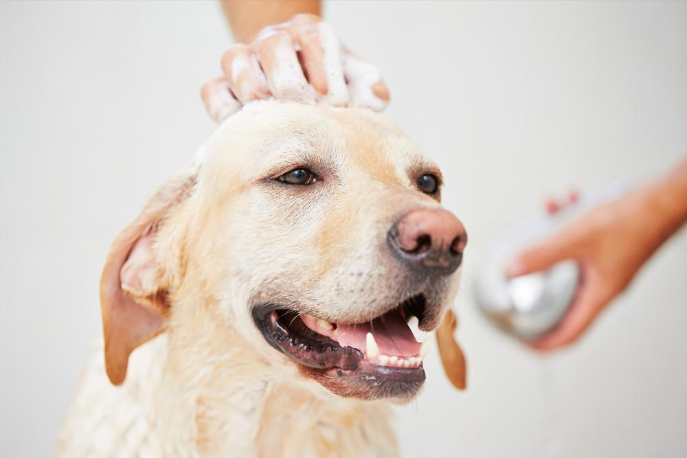 How to Groom a Dog to Keep Your Furry Friend Happy and Healthy