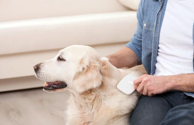 Keep Your Pet Fresh With These 3 Natural Pet Odor Eliminator Tips