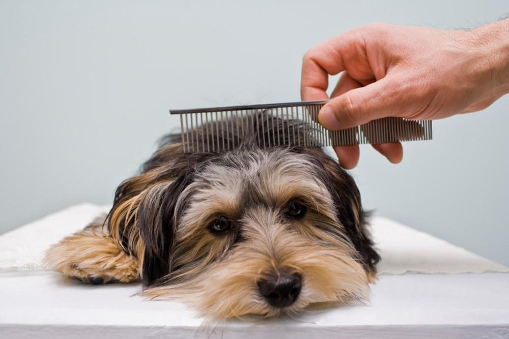 Unregulated Dog Grooming Industry Puts Your Dog at Risk