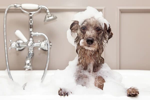 Dog Odor Remedies on Dogs Image - FB