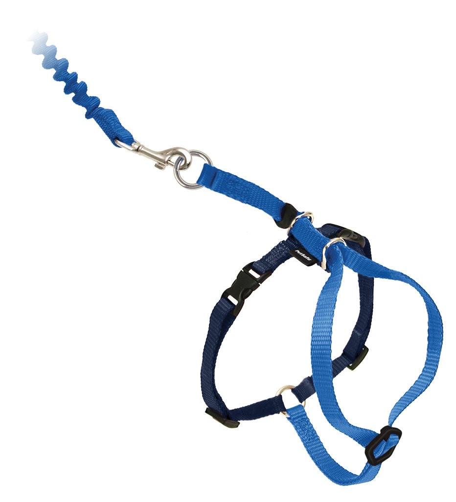 Come with Me Kitty Leash & Harness