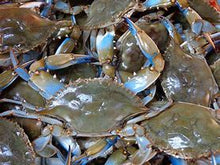 Load image into Gallery viewer, Live Blue Crab by the Dozen