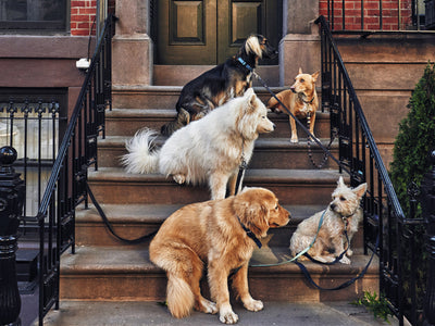 Most Popular Dog Breeds in NYC